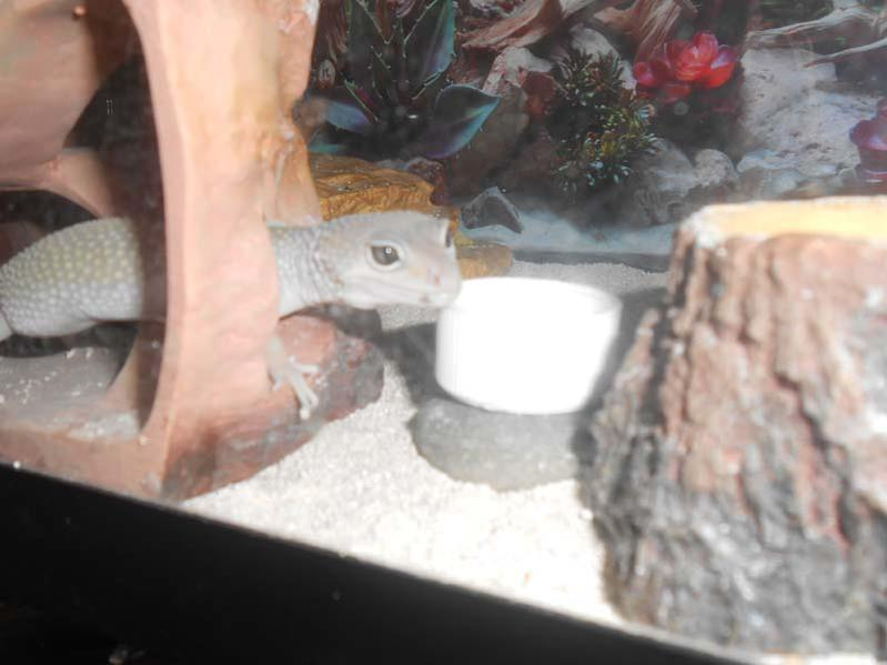 Photo's of Randall an his home's