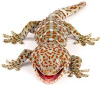 A group for all the gecko owners/breeders in Michigan.