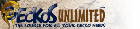 Geckos Unlimited
